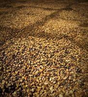Las plantas de café de Kona