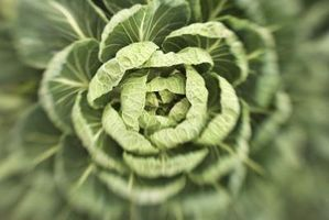 ¿Qué hacen los amoniaco nitrato y fósforo de interés para las plantas?