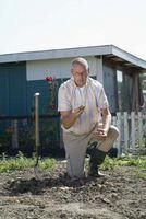 Cómo obtener una papa blanca para hacer crecer una vid