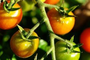 Cuándo plantar Fruta y verdura?