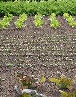 ¿Cómo planificar una parcela de jardín?