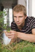 Cómo crear un cuarto de cultivo