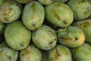 Cómo cuidar los árboles de mango