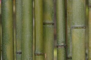 Como arena Palos de bambú