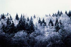 Cómo identificar los árboles del sureste