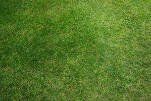 ¿Puede usted Coloque la nueva hierba Más de Dead césped?