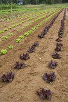 La rotación de cultivos de hortalizas