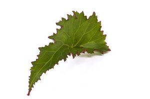 Usted puede Iniciar nueva Casa de las plantas de las hojas?