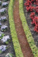 Flores y plantas que pueden sobrevivir la luz solar directa