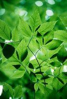 Key Stage 2 para las plantas verdes