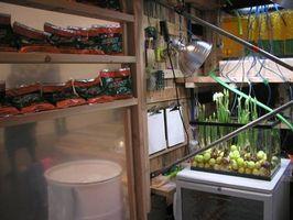 ¿Cómo hacer crecer hierba con Gatorade