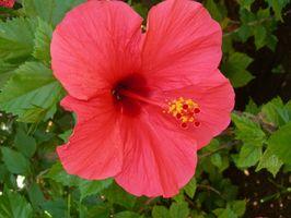 Las flores que florecen todo el primavera y verano