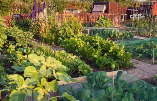 Cómo diseñar paisajes comestibles