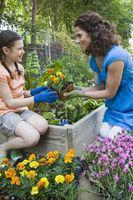 Flores para la jardinería