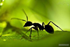 Cómo matar hormigas con los productos para el hogar