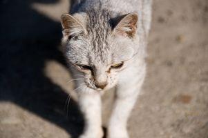 Cómo quitar el olor del gato de la alfombra