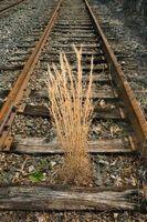 Cómo construir un jardín de borde con traviesas de ferrocarril