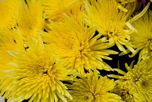 ¿Qué flores pueden I planta para el otoño?