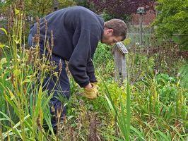 ¿Cómo deshacerse de las malas hierbas Cabeza de la cabra