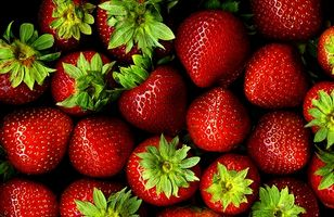 A principios cultivar plantas de fresa