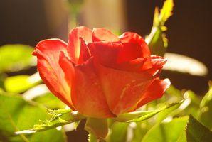 Los efectos de la luz y la oscuridad sobre el crecimiento vegetal