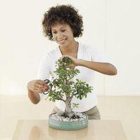 Instrucciones para crear Bonsai Plantas