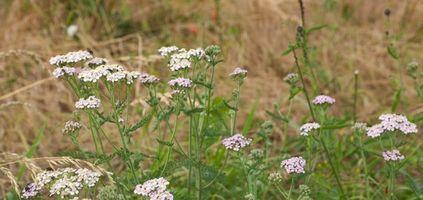 Las mejores plantas para jardín en Wyoming