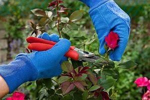 Cómo mantener herramientas de jardín