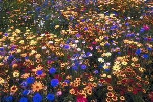¿Cómo encontrar varios tipos de flores