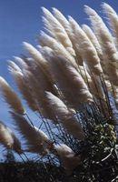 Planta ornamental Coberturas