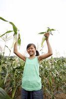La comprensión de nitrógeno de fertilizantes
