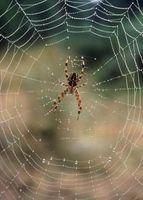 Cosas segura para matar arañas en los hogares con niños