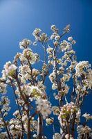Cómo plantar árboles frutales en Medford, Oregón