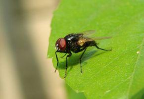 Remedio casero para matar moscas