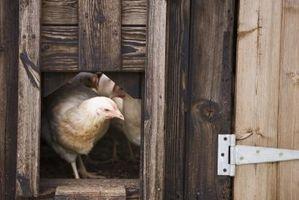 Los excrementos de pollo son un buen fertilizante?