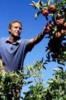 El Mejor Fungicidas para los árboles frutales