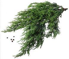 Usos de las bayas de enebro hierba