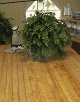 Lista de plantas colgantes para el baño