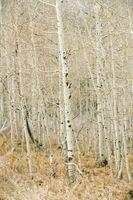 Ciclo de una planta en el bosque de hoja caduca