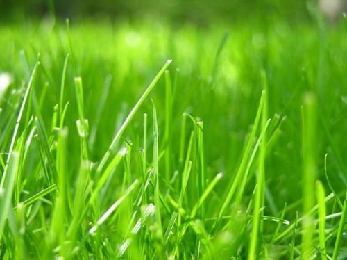Ideas innovadoras para sembrar la hierba