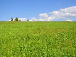 ¿Cuánto tiempo Bermuda Grass tarda en crecer?