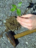 Los herbicidas que pueden ser utilizados alrededor de la plantación de árboles