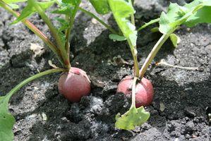Proceso de nitrógeno de fertilizantes