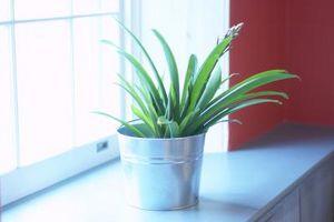 Cómo reproducir Interior luz del sol para las plantas