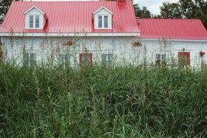 Cómo ajustar un paisaje cubierta de hierbas