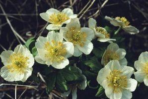 Las plantas que florecen en la Parte Sol y Sombra