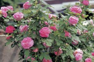 Los fertilizantes para plantas de flores