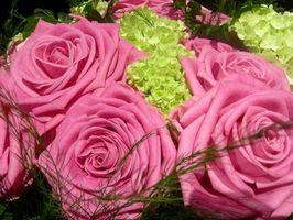 Las plantas que van bien con las rosas