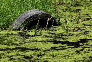 Diferencias entre las algas y plantas