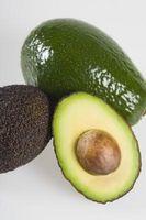 ¿Cómo hacer crecer un árbol de Avacado: Baja producción de frutas ¿Cuánto tiempo antes?